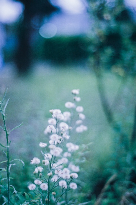 花(Nikon EMで撮影)