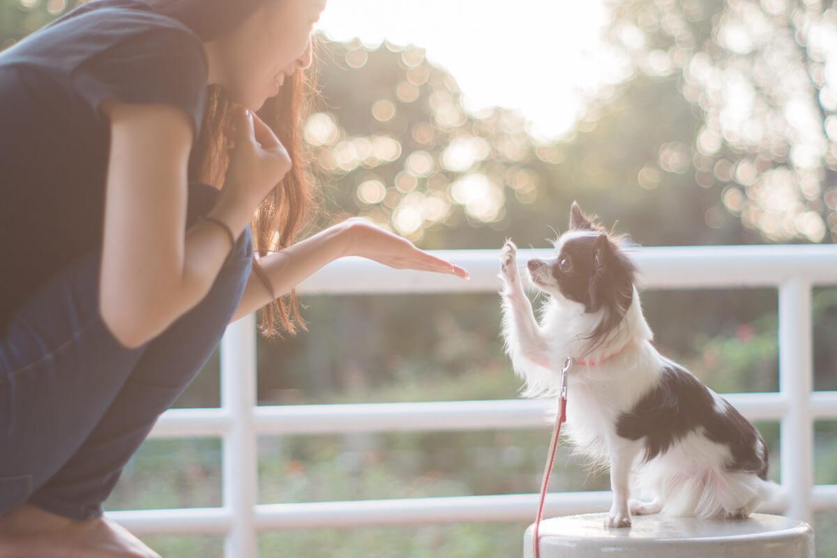 妻と愛犬(Helios【ヘリオス】で撮影)