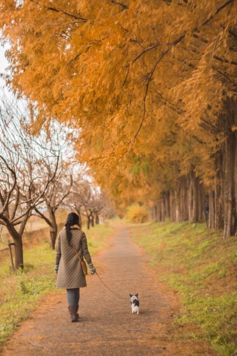 メタセコイア並木を散歩する妻と愛犬(Helios【ヘリオス】で撮影)