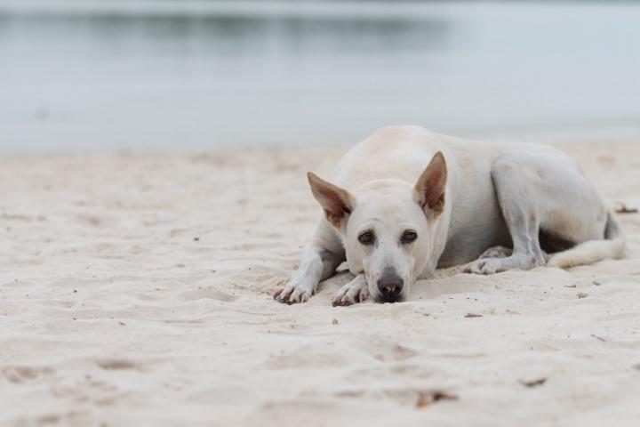 ビーチで寝転がる犬