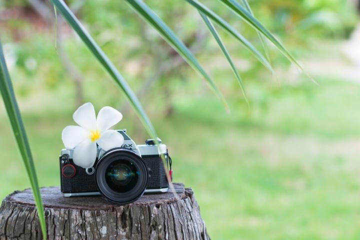 フィルムカメラと花