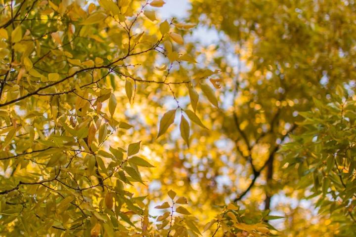 黄色く色づき始めた葉っぱ