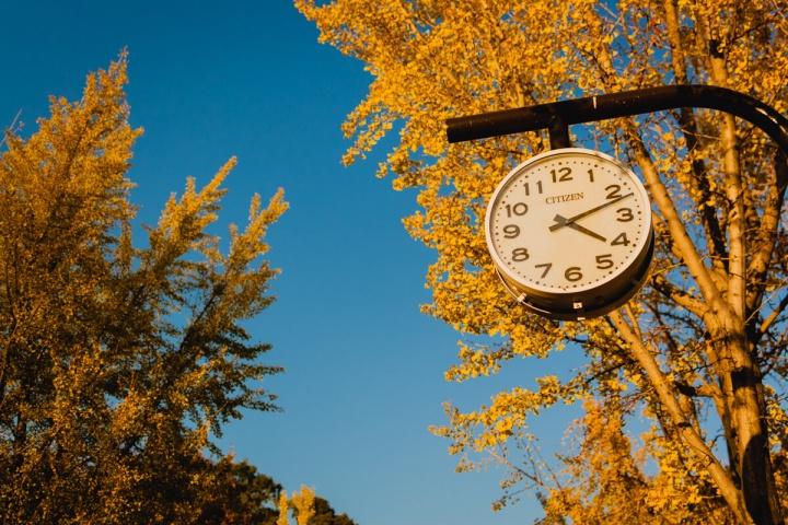 イチョウと時計