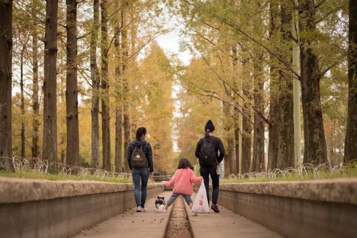秋の風景とYちゃん