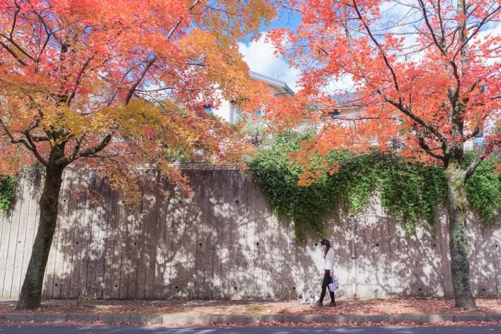 三色彩道の紅葉と青空と白い壁