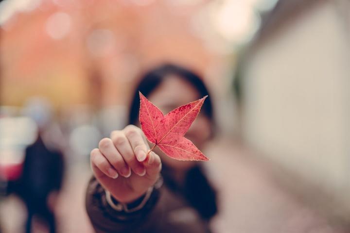 三色彩道の紅葉した葉っぱ