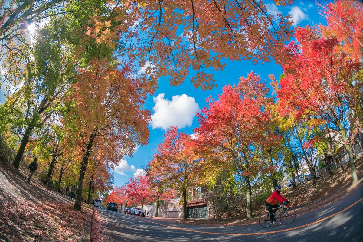 紅葉した三色彩道とロードバイク