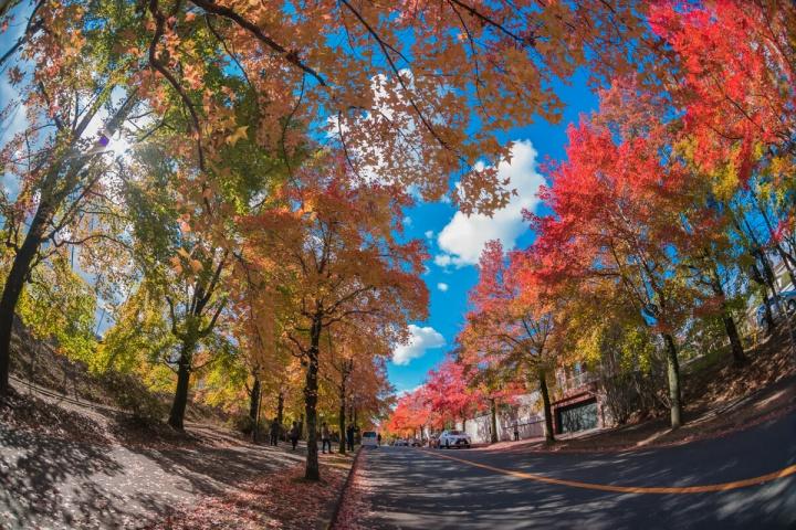三色彩道の紅葉と青空