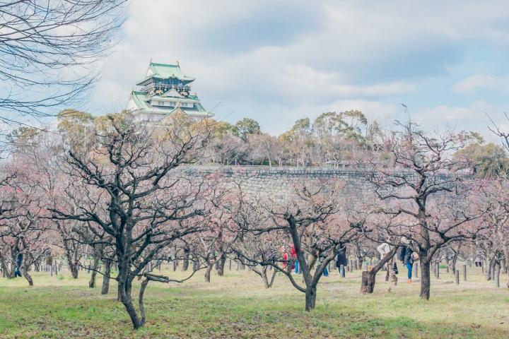大阪城公園の梅林と大阪城