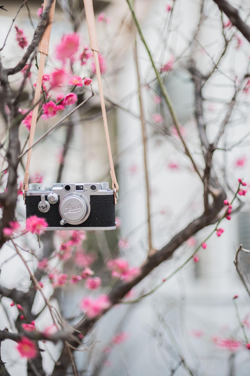 梅とバルナックライカ Leica IIIf (3f)