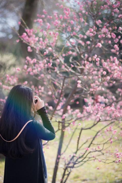 大阪城公園の梅林 撮影する妻