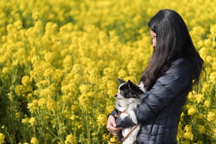 あわじ花さじき 菜の花畑 妻と愛犬