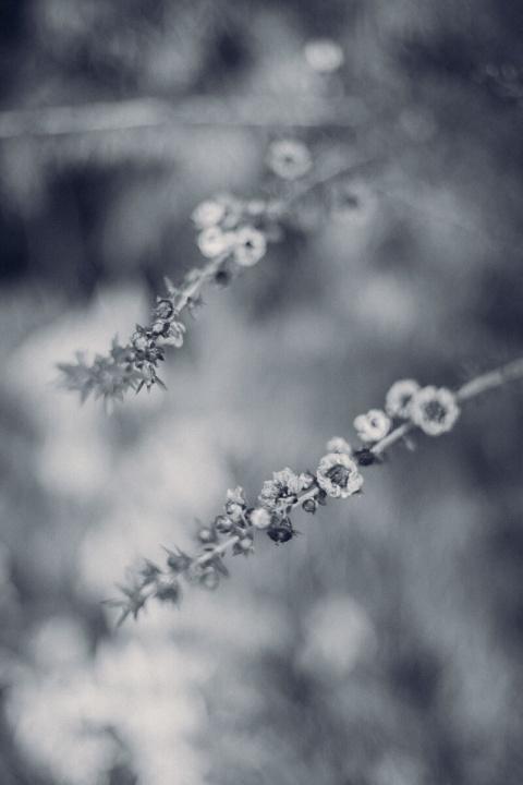 モノクロスナップ写真 花