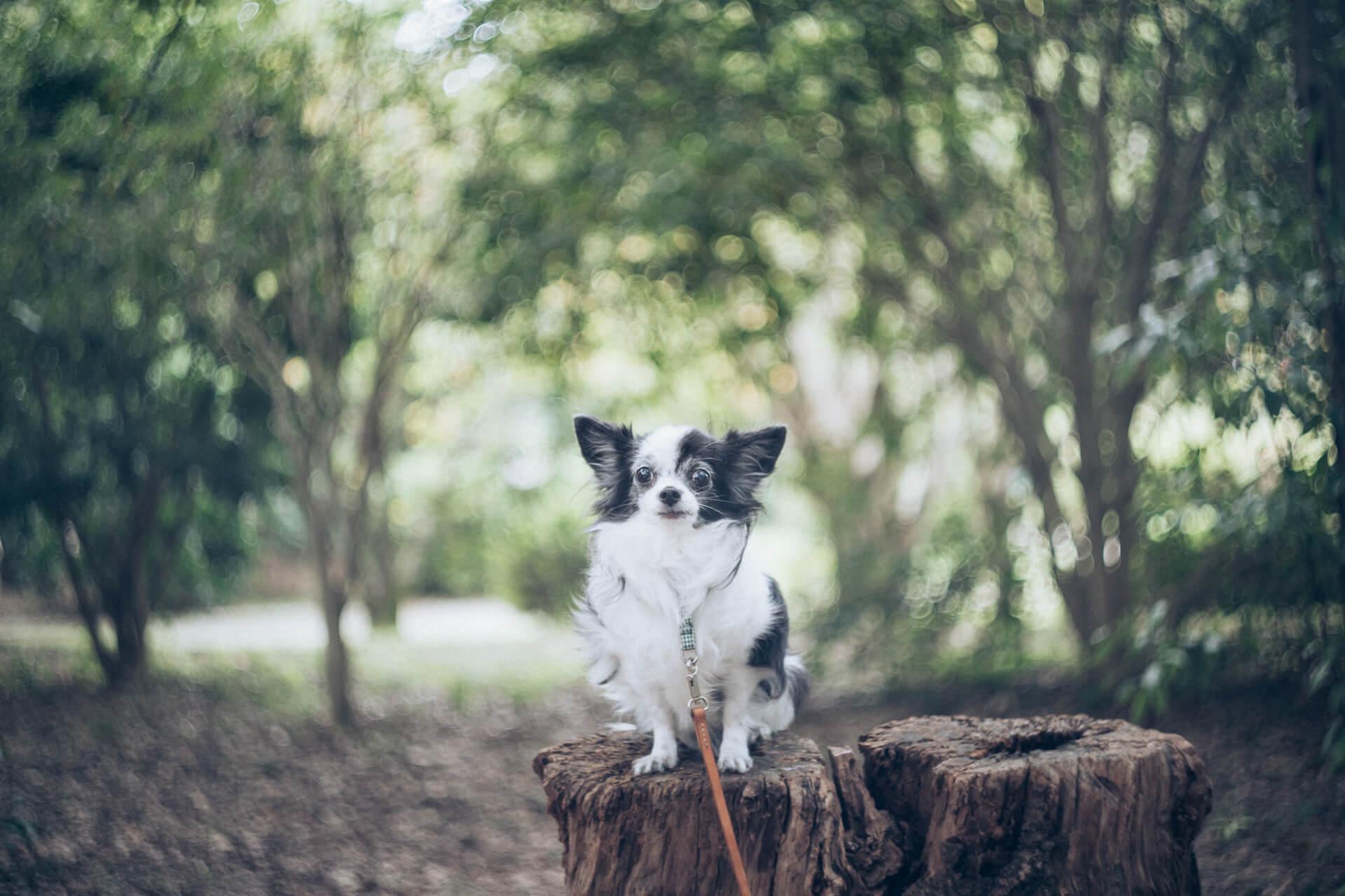 愛犬とグルグル