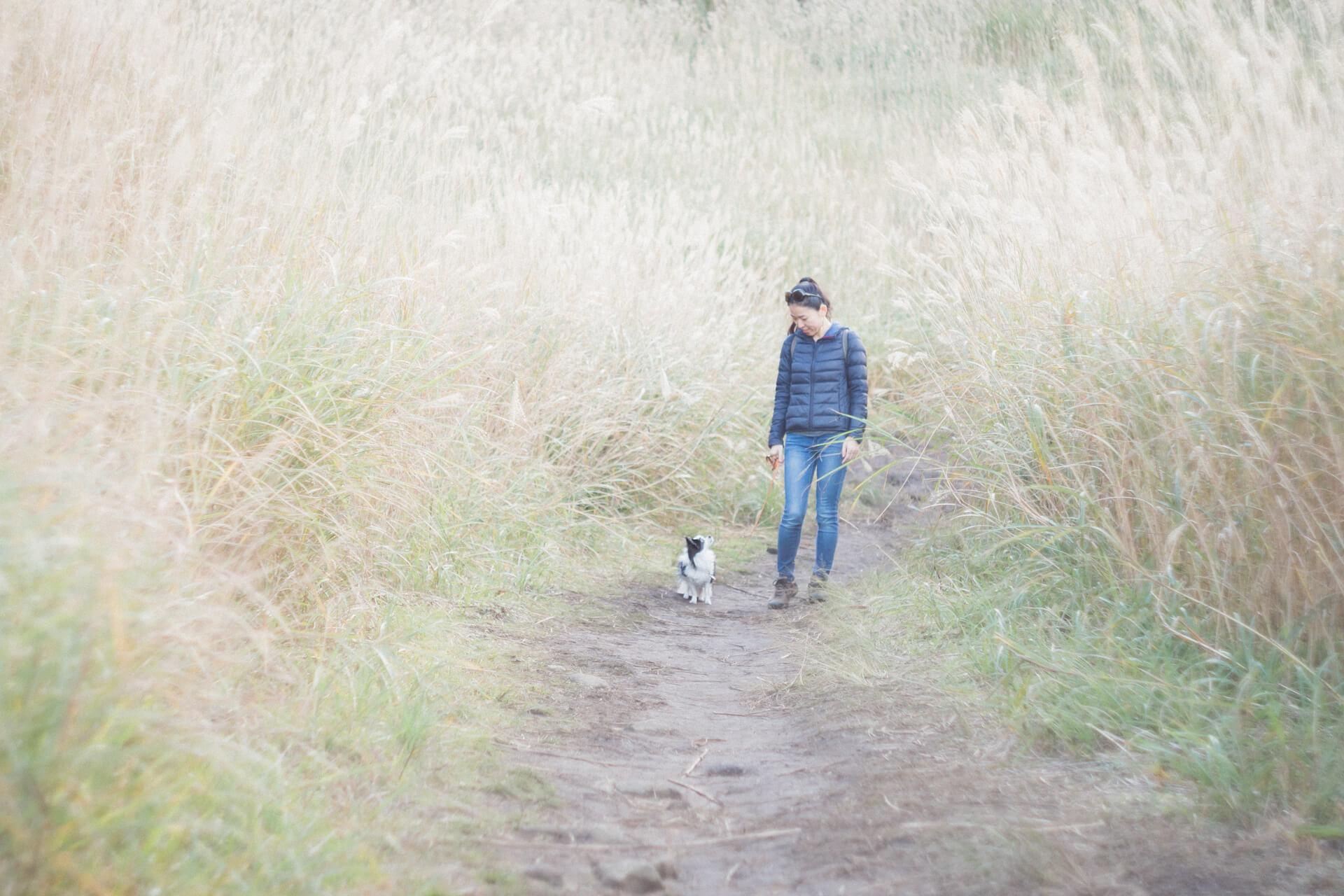 砥峰高原のススキと妻と愛犬